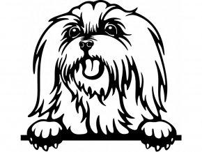 Samolepka pes - Maltéz jazyk