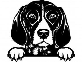 Samolepka pes - Německý ohař krátkosrstý