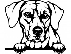 Samolepka pes Rhodéský ridgeback