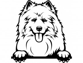 Samolepka pes - Samojed jazyk