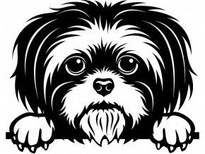 Samolepka pes Shih tsu