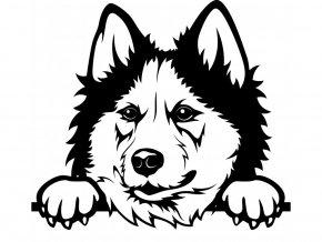 Samolepka pes Sibiřský husky