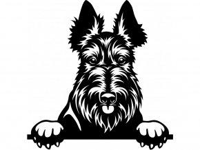 Samolepka pes Skotský teriér
