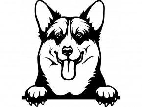 Samolepka pes Welsh corgi pembroke