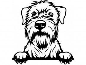 Samolepka pes Wheaten