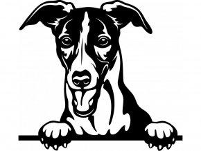 Samolepka pes - Whippet