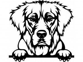 Samolepka pes Zlatý retrívr