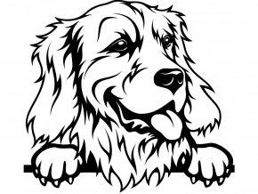 Samolepka pes Zlatý retrívr vyplazený jazyk