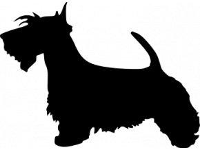 Samolepka pes - Skotský teriér