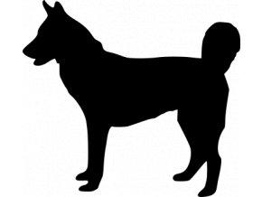 Samolepka pes - Husky