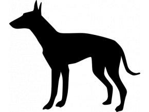 Samolepka pes - Ibizský podenco