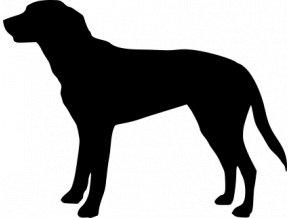 Samolepka pes - Velký Švýcarský salašnický pes