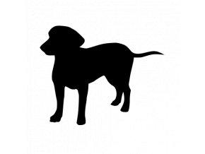 Samolepka pes - Entlebuchský salašnický pes