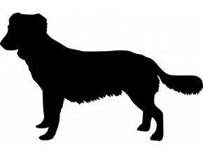 Samolepka pes - Kanadský retrívr