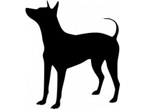 Samolepka pes - Americký bezsrstý teriér