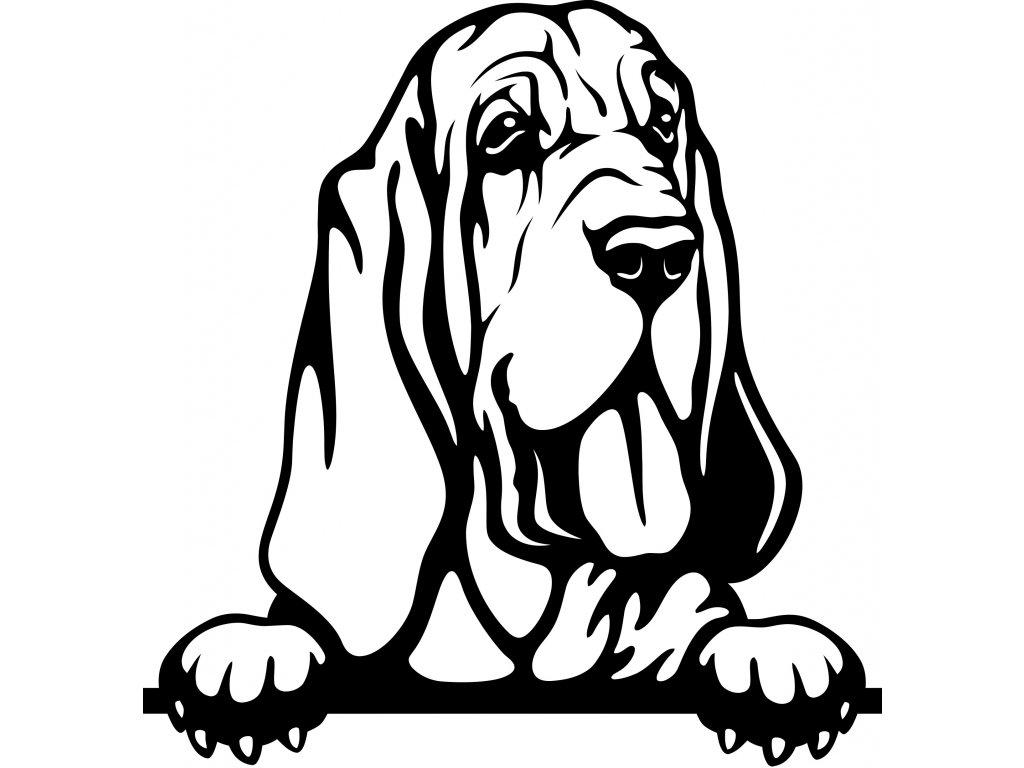 Samolepka pes - Bloodhound Barva: Bílá, Rozměry samolepky ( šířka x výška ): 20 x 20,8 cm