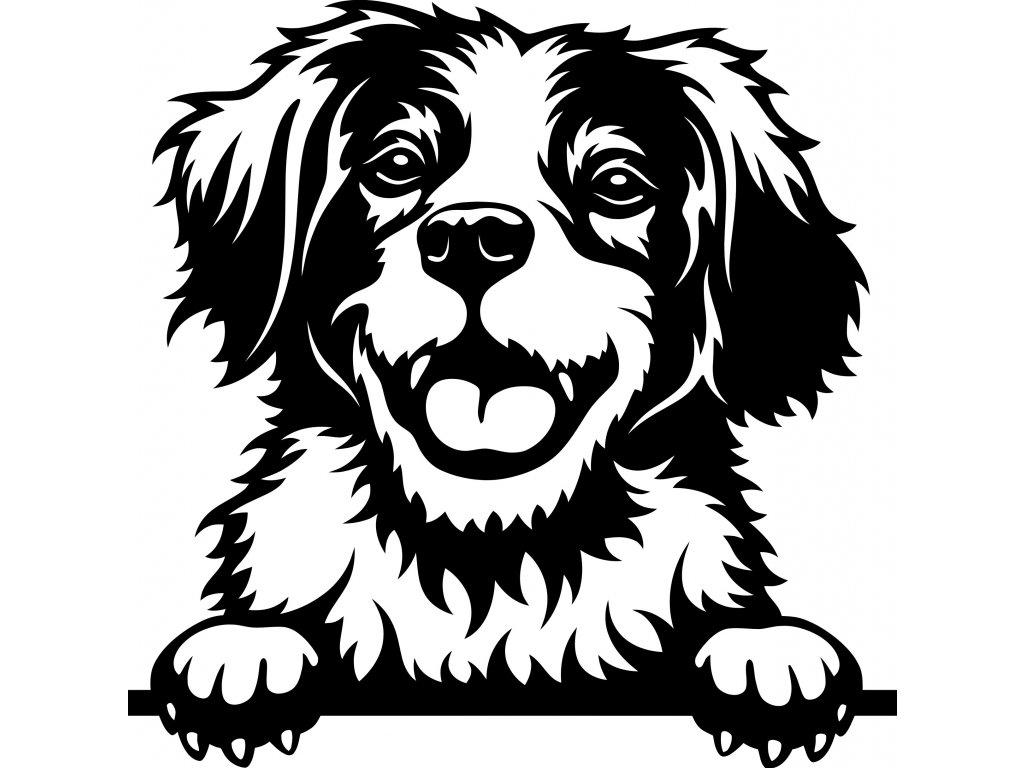 Samolepka pes - Bretaňský ohař Barva: Bílá, Rozměry samolepky ( šířka x výška ): 20 x 20 cm