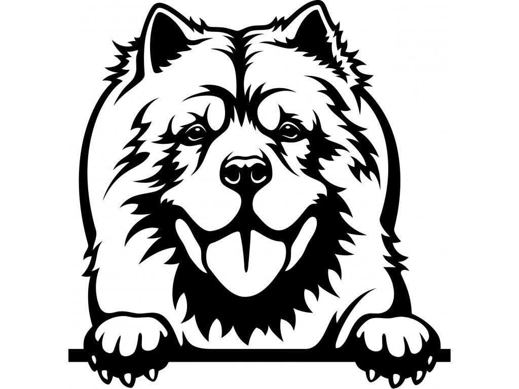 Samolepka pes - Čau-čau Barva: Bílá, Rozměry samolepky ( šířka x výška ): 20 x 20,4 cm