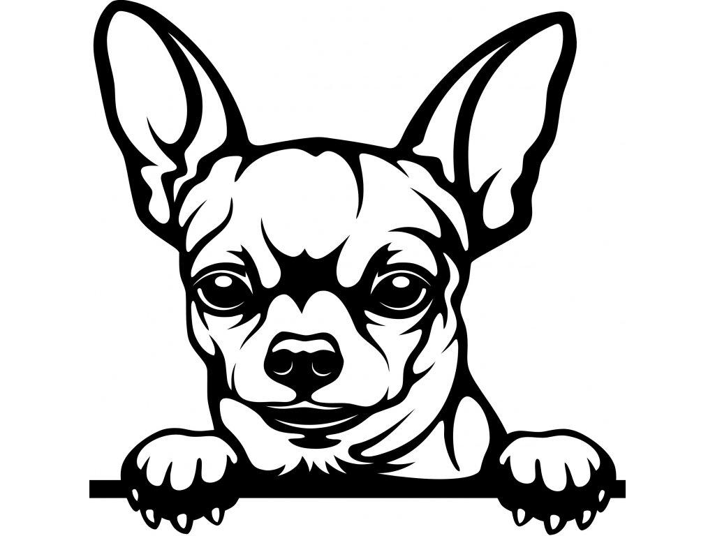 Samolepka pes - Čivava Barva: Bílá, Rozměry samolepky ( šířka x výška ): 20 x 20 cm