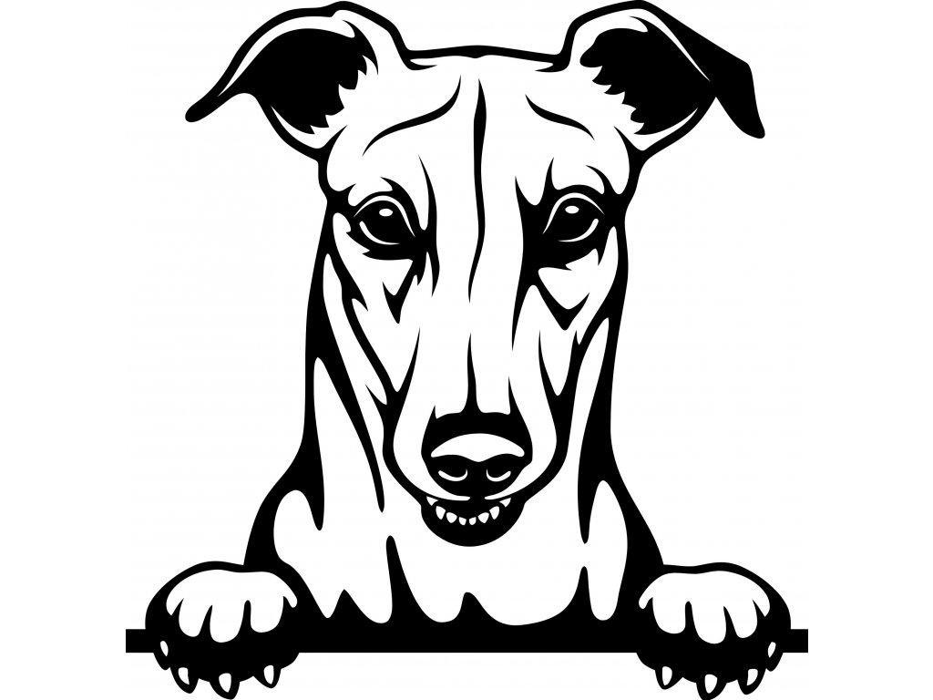 Samolepka pes - Greyhound Barva: Bílá, Rozměry samolepky ( šířka x výška ): 20 x 20,5 cm