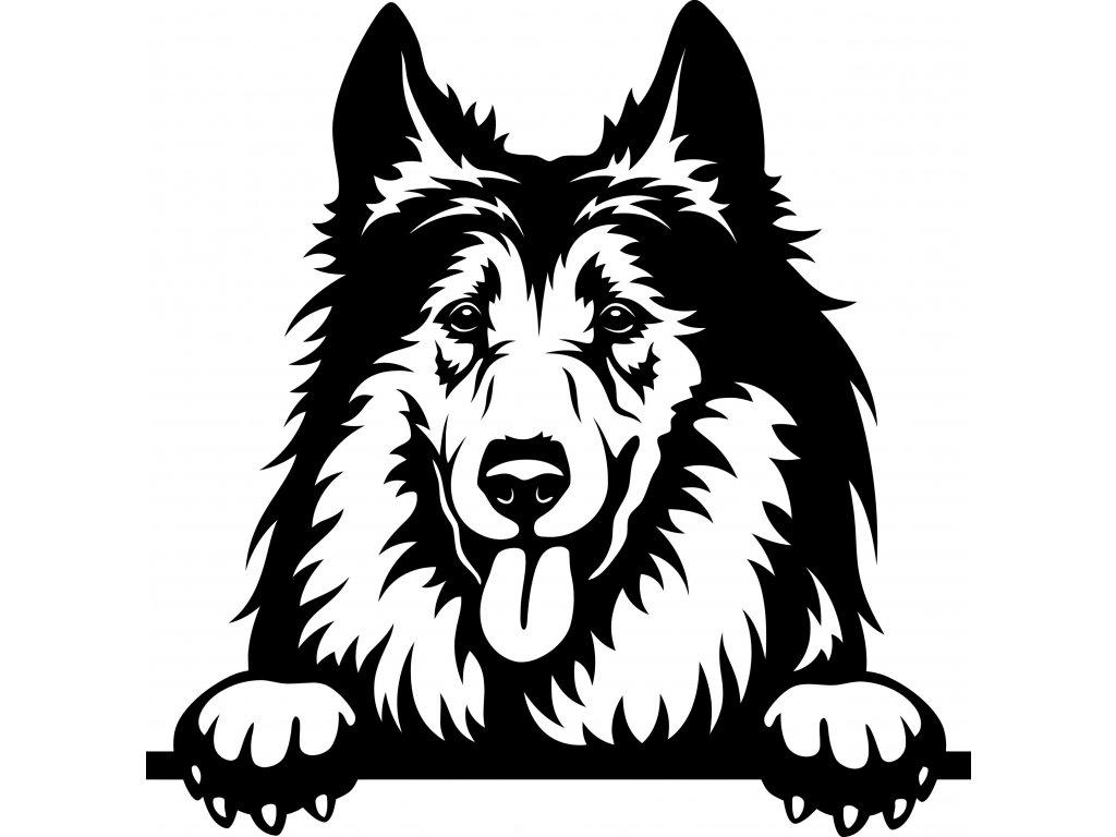 Samolepka pes - Kolie Barva: Bílá, Rozměry samolepky ( šířka x výška ): 20 x 20,3 cm