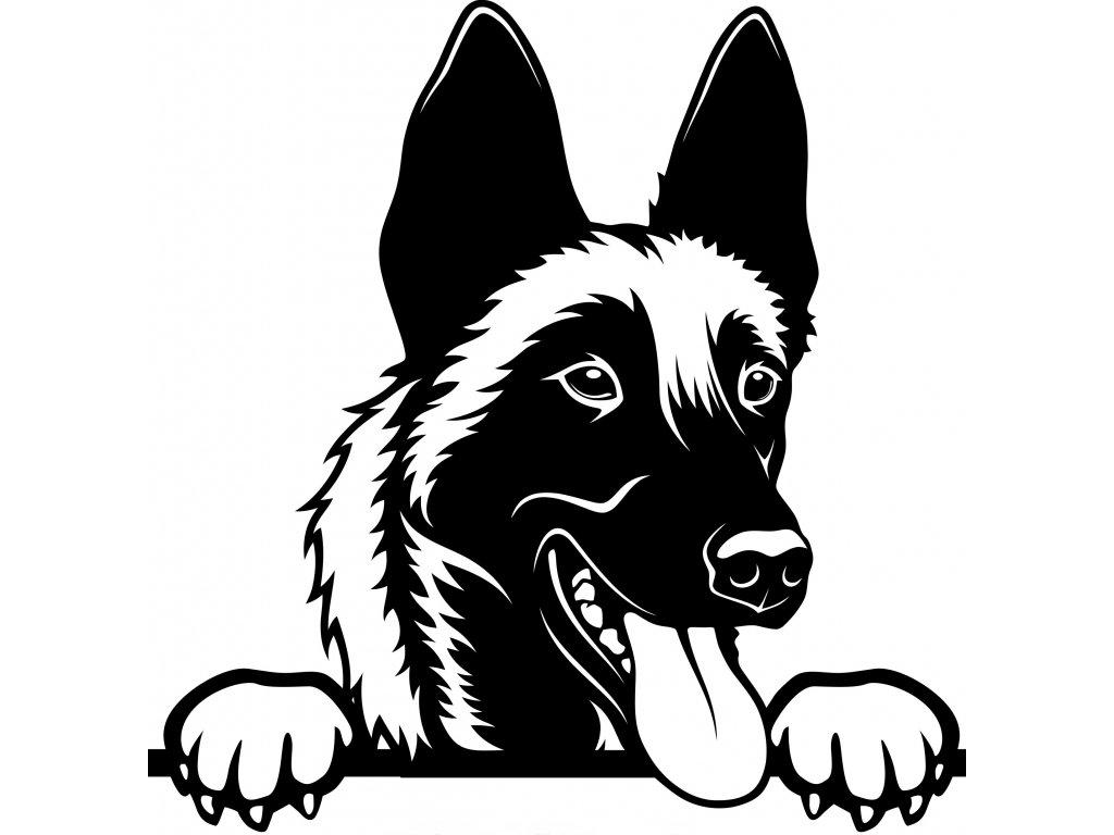 Samolepka pes - Malinois Barva: Bílá, Rozměry samolepky ( šířka x výška ): 20 x 20,4 cm
