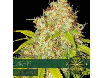 Samonakvétací semeno  AK-49