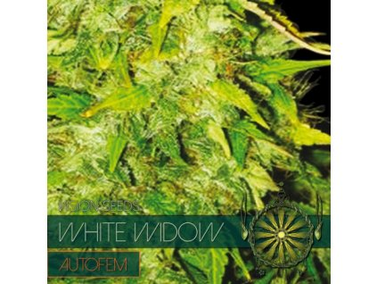 Samonakvétací semeno  WHITE WIDOW