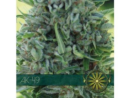 Feminizované semeno DARK STAR X AK-49