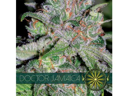Feminizované semeno DOCTOR JAMAICA