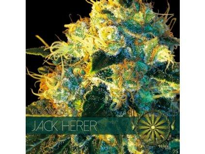 Feminizované semeno JACK HERER
