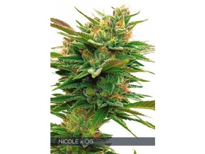 Feminizované semeno NICOLE X OG