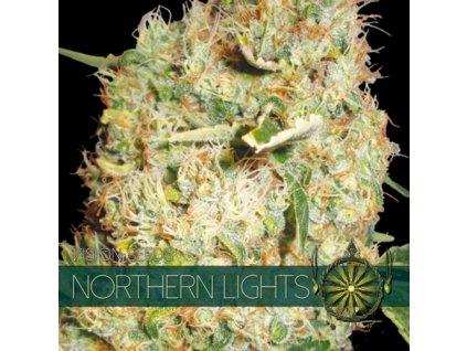 Feminizované semeno NORTHERN LIGHTS