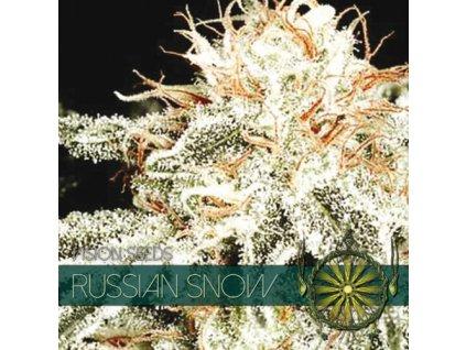 Feminizované semeno RUSSIAN SNOW