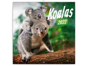 poznamkovy kalendar koaly 2022 30 30 cm 845043 31