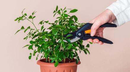 Zaštipování rostlin