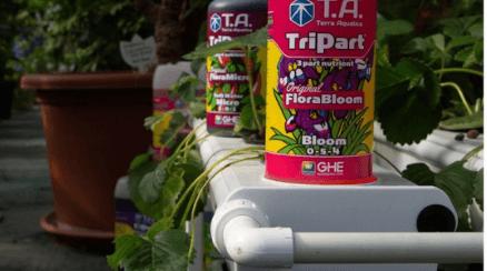 Jak začít hydroponicky pěstovat