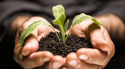 Jaké jsou fáze života rostlin?