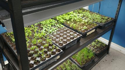 1. díl Začínáme pěstovat indoor