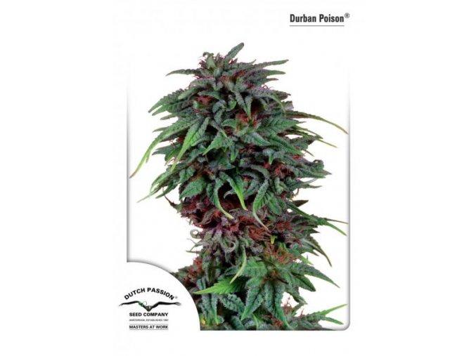 Durban Poison 10 ks Reguler