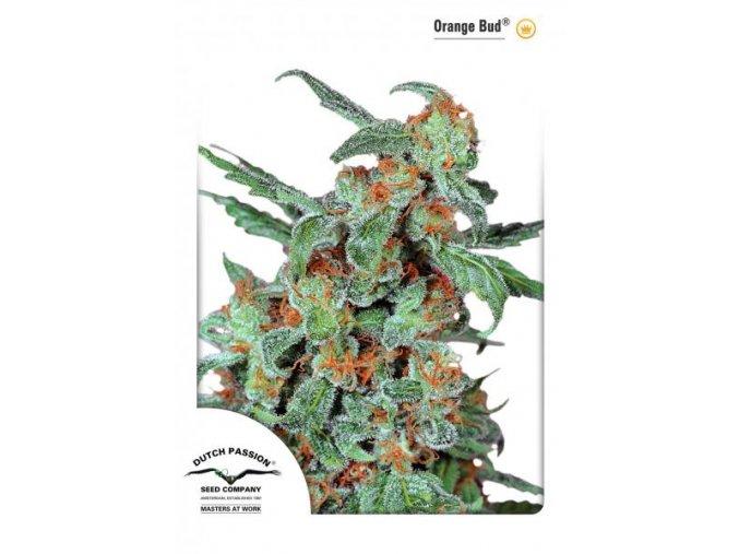 Orange Bud 10 ks Reguler
