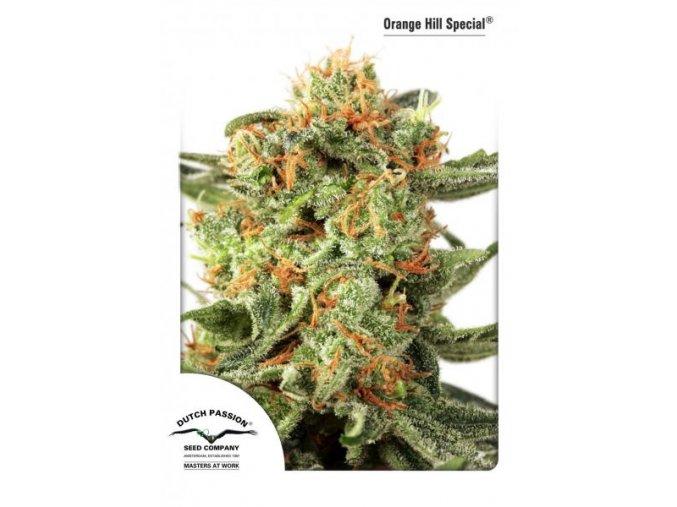Orange Hill Special 10 ks Reguler