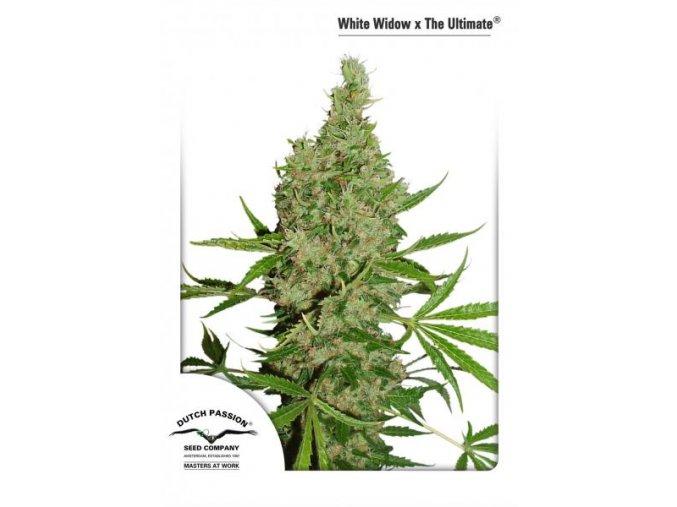 White Widow X The Ultimate 10 ks Regular