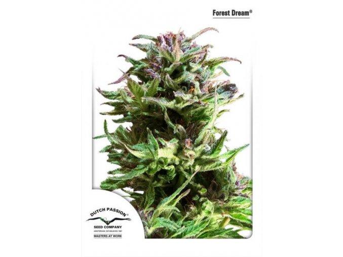 Forest Dream 5 ks