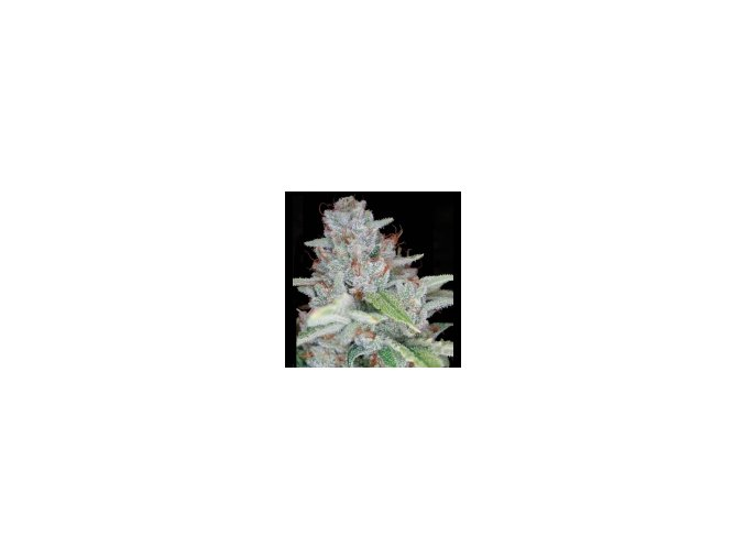 Reserva Privada skywalker kush 6 ks