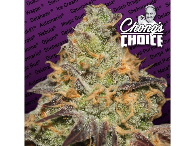 chong webpictures strains indica logo
