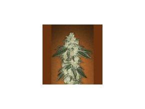 Fast Buds Green Crack 3 ks