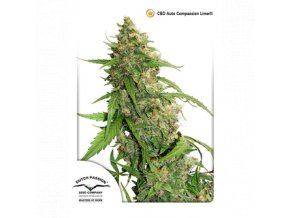 dutch passion auto 3er auto cbd compassion lime 1