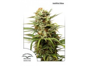 Auto White Widow 7 KS