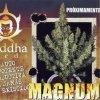 Buddha Magnum 50 ks